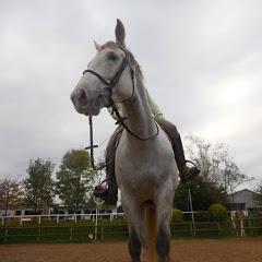 Horse-Republic