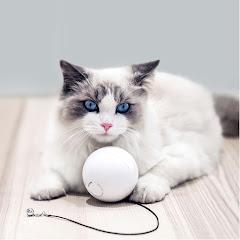 Homerun Tech- Smart Pet Products