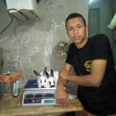 مزرعه محمد حماد للارانب
