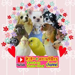 【みっきーとゆかいな仲間たちChannel】 #チワワ#インコ#保護犬#ハムスター#うさぎ