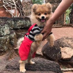 Lucy The Stunt Pet