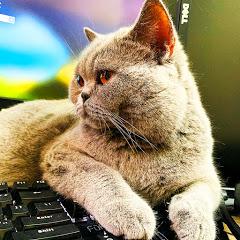 Mèo Mặt Ngâu