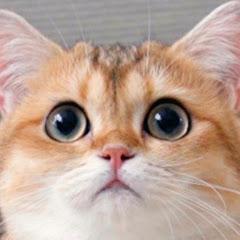 그루밍데이 고양이cat vlog