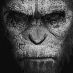 Le Scimmie CrossFit