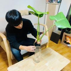 식물집사독일카씨