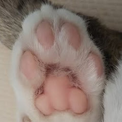 空飛ぶ猫 / flying cats