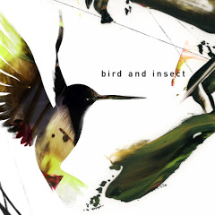 bird and insect