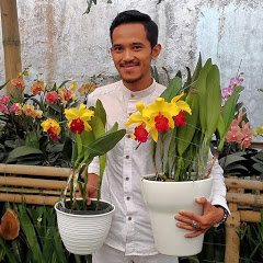 Fahri Orchid & Outfit