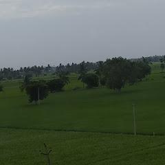 Sridhar Bellam