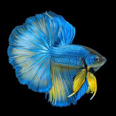 Fish Film
