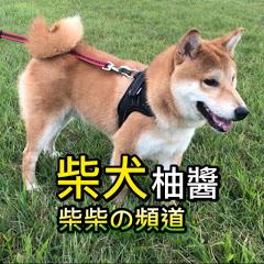 「柴犬柚醬」「柴犬 ゆうちゃん」
