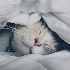 NegotoNeko 夢話貓咪