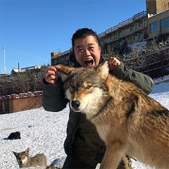 我在新疆养狼Keep the wolf in Xinjiang China