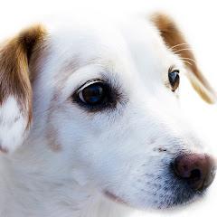 R&P Rescue Pets