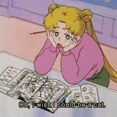 회색아기고양이