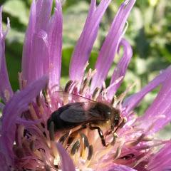 تربية النحل في بومرداس الجزائر