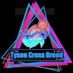 Tyson Cross Breed Farm
