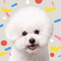 순무는여행중 travel dog Soon-moo