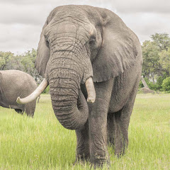 Living With Elephants Foundation