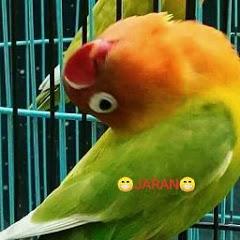 bikang bird