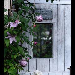 rui バラの庭作り