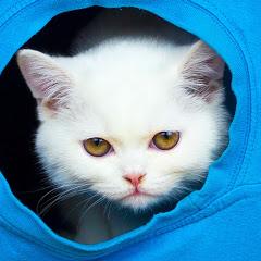 Mis Gatos Graciosos — My Funny Cats