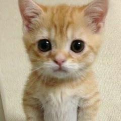 かわいい動物チャンネル