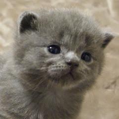 子猫のイクラちゃんねる
