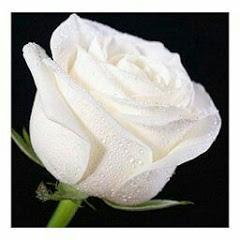 La Rosa De Guadalupe Capitulos