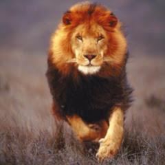 Lion Clash ليون كلاش