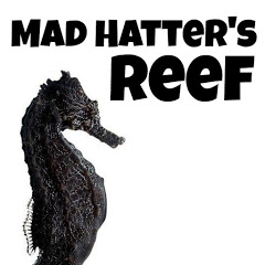 Mad Hatter's Reef