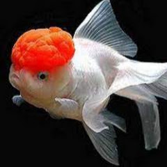 Cerita Ikan