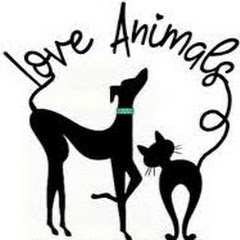 Love Animals US