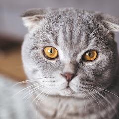 الطف القطط sweetest cats