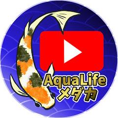 AquaLifeメダカ