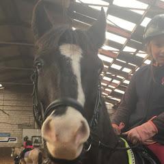 Paarden Lover