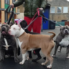 Giant Bully Pitbulls Rasit Kaplan