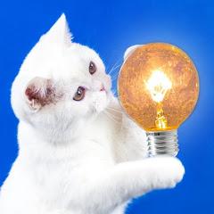 Ý tưởng đơn giản — Simple Ideas