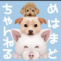 めはまどchannel【保護犬預かり】