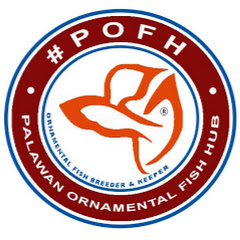 #POFH Palawan Ornamental Fish Hub