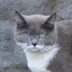ちゅー猫チャンネル