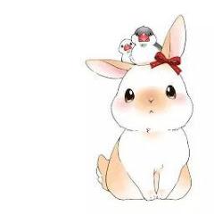兔兔不可愛