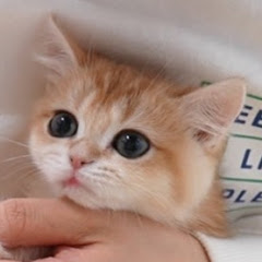 하루미루HaruMiru Cat