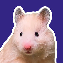 HAMSTERS SHOW