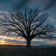 Sebatang Pohon