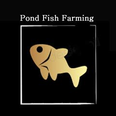 Pond Fish Farming