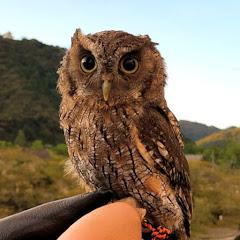 フクロウ日記OWL CHANNEL