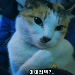 캣언니유햄 yoohamcat