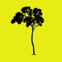 Jamie Tree