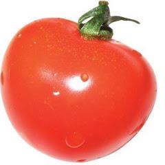 멋쟁이토마토